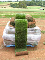 Astroturf Warehouse Club: We lie in bulk and pass the BS on to you!