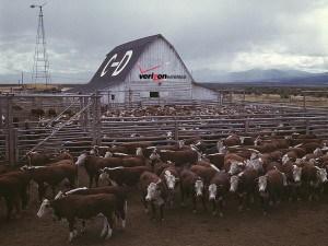Herding money, resources, and customers to Verizon Wireless