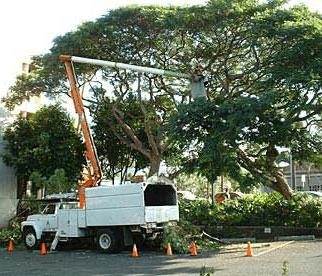 tree trim